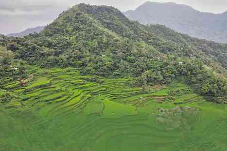 Ancient agri practices may be key to food security | Vietnam: Inclusive & Sustainable Agriculture | Scoop.it