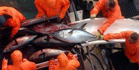 Il n'est pas trop tard pour reconstituer les stocks de poissons   Nutrition, Santé & Action   Scoop.it