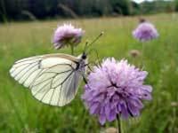 Les papillons | Ressources d'autoformation dans tous les domaines du savoir  : veille AddnB | Scoop.it