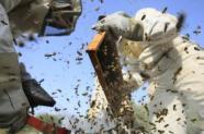 Pesticide Cruiser OSR: apiculteurs et élus en appellent au gouvernement | AFP | Toxique, soyons vigilant ! | Scoop.it