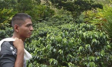 Trouble brewing in Guatemala's coffee and cardamom fields - The Guardian | economics | Scoop.it