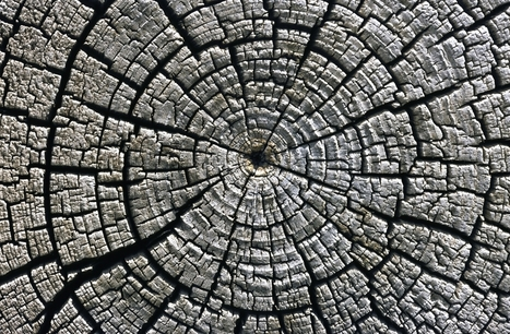 If trees could speak - How archaeologists use tree rings to uncover history's secrets   Archaeo   Scoop.it