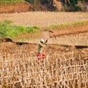 What Climate Change Means for Farmers in Asia | Climate Smart Agriculture | Scoop.it