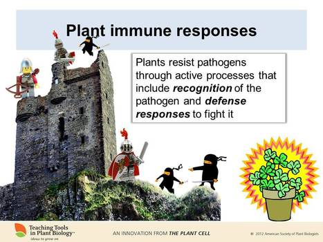 Plants and Pathogens teaching tool updated and revised | Effectors and Plant Immunity | Scoop.it