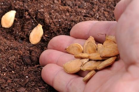 Semences: « La Commission européenne balaye 10.000 ans d'histoire agricole » | Le Monolecte | Scoop.it