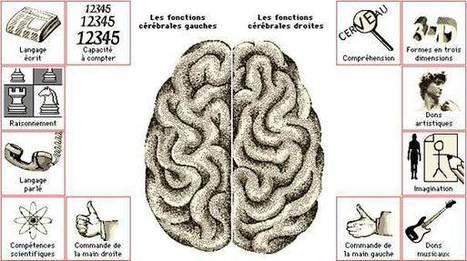 Cerveau droit ou gauche : à quoi nous sert-il? | Cerveau | Scoop.it
