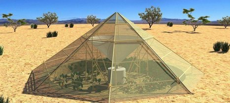 This Innovative Greenhouse Makes It Possible to Grow Crops Even in the Desert! ⋆ | Peer2Politics | Scoop.it