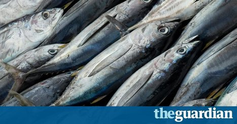 Global fish production approaching sustainable limit, UN warns | IB LANCASTER GEOGRAPHY CORE | Scoop.it