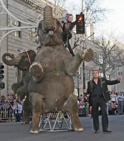 Animal rights group files complaint over circus elephant 'abscess' - Billings Gazette | Direitos dos animais | Scoop.it
