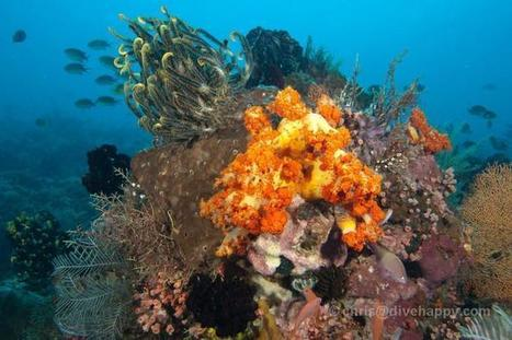 Going for Komodo Liveaboard Diving | Water Boats | Scoop.it