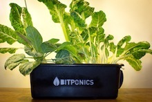 Startup Co. Bitponics Develops Device to Take Guesswork Out of Hydroponic Gardening | Growing Food | Scoop.it