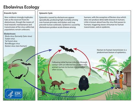 Diez preguntas sobre el Ébola   Docencia: TIC, innovación educativa y Ciencias naturales   Scoop.it