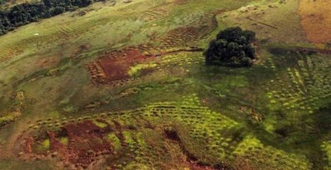 Study Reveals 800-Year-Old Sustainable Farming in Amazonian Savannas | Archaeology | Sci-News.com | Inside and Outside Travels | Scoop.it