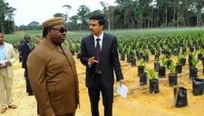 Gabon : Olam va vendre 18 millions de dollars d'actifs forestiers à ... | Gabon | Scoop.it