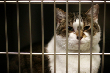 No Cat Left Behind: Humane Society Offers FREE Cat Adoptions - CBS Local | Animal Abuse | Scoop.it