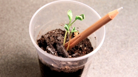 Um lápis que se planta e dá vegetais, ervas e flores | Digital Sustainability | Scoop.it
