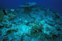 Ocean Acidification Is Worse Than It's Been for 300 Million Years | ScubaObsessed | Scoop.it