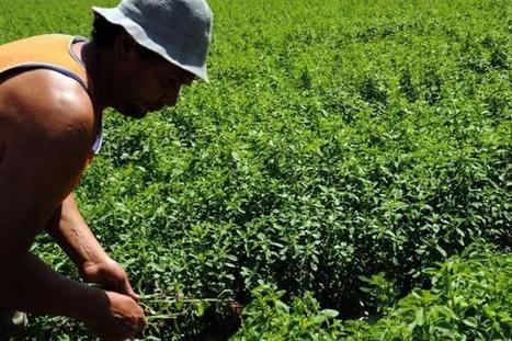Doctor Agro, la aplicación de Corpoica para el campo colombiano ... - Vanguardia Liberal | Alimentos | Scoop.it