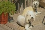 Person who gave Leesburg dogs tainted treats still not found - WJLA | Animal Abuse | Scoop.it