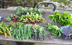 12 Important Reasons to Have a Home Vegetable Garden | Gardening Life | Scoop.it