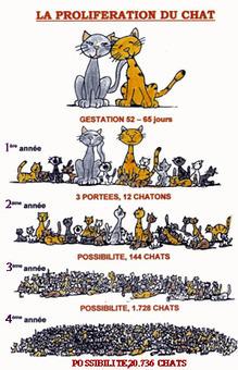 proliferation.jpg (258x400 pixels) | Histoire de chats | Scoop.it