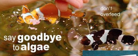 10 Ways to Control Algae | Aquarium | Scoop.it