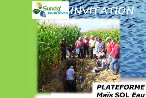 Le8 septembre : visite de la plate-forme Maïs SOL Eau à Dannemarie (68)   AC Agriculture de Conservation   Scoop.it