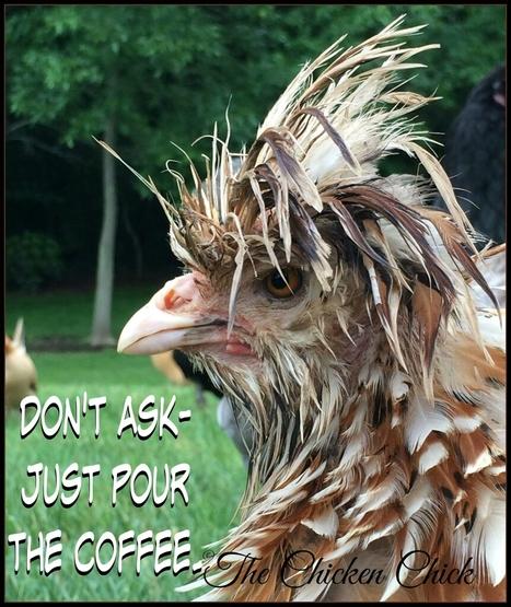 Coffee please | Educational cartoons and jokes | Scoop.it