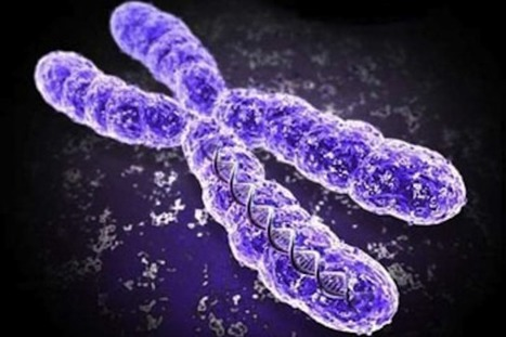 BBSRC mention and video: X doesn't mark the spot: real shape of chromosomes revealed | BIOSCIENCE NEWS | Scoop.it