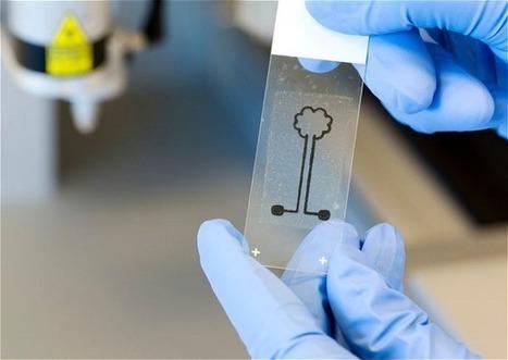 Stampanti 3D, la cellulosa sarà tra i materiali utilizzabili per creare i ... - TecnoYouth (Blog) | Tutto3D.com | Scoop.it