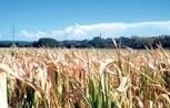 A cause du climat, les paysans au régime sec | Questions de développement ... | Scoop.it
