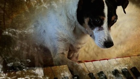 "Laurie Anderson On Her New Film, ""Heart of a Dog"" 