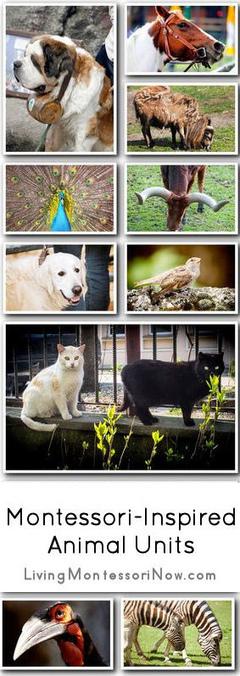 Montessori Monday – Montessori-Inspired Animal Units   Earlier Children education   Scoop.it