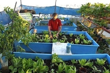 UN Introduces Aquaponics to Urban Farming in Gaza — City Farmer News | Vertical Farm - Food Factory | Scoop.it
