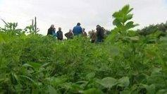 Agriculture : La culture de la luzerne redevient à la mode  - France 3 Basse-Normandie | Redox signalling and Plant Symbioses | Scoop.it