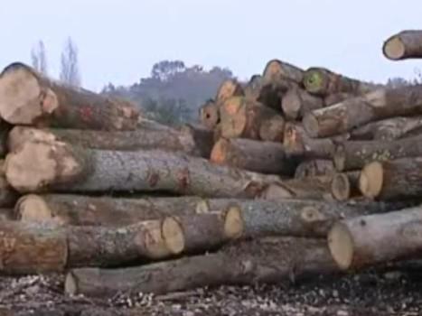 Le chauffage au bois menacé par la hausse de la TVA - Rue89 | TVA | Scoop.it