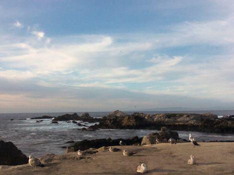 Le Pacifique à Carmel, Californie | The Blog's Revue by OlivierSC | Scoop.it