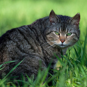 Domestic cats are destroying the planet | The World Planet | Scoop.it
