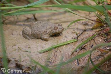 Un bilan de la faune et de la flore en 2013 dans le Cher | EntomoNews | Scoop.it