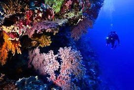 Corals can fight ocean acidification - Brisbane Times | preservemarinelife | Scoop.it