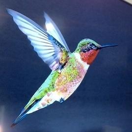 Hummingbird (colibri), nouvel algo du moteur de... | Stratégies digitales | Scoop.it