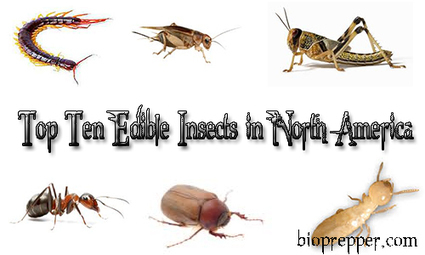 The Top Ten Edible Insects in North America | Entomophagy: Edible Insects and the Future of Food | Scoop.it
