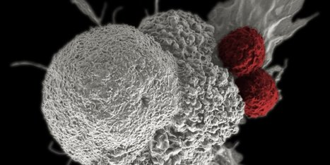 CRISPR Targets Cancer in First Human Trial — What You Need to Know | Longevity science | Scoop.it