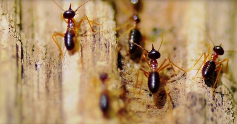 Termites Are Teaching Architects to Design Super-Efficient Skyscrapers | Embodied Zeitgeist | Scoop.it