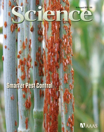 Stem rust fungus on the cover of Science (2013) | Fungi | Scoop.it