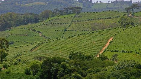 Yes, Brazil does good #wine too | Vitabella Wine Daily Gossip | Scoop.it