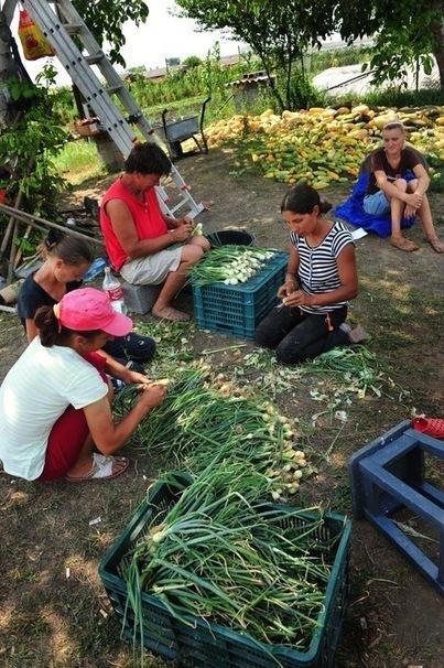 ROUMANIE: Le bel avenir bio de l'agriculture roumaine   la perte des surfaces agricoles mondiales   Scoop.it