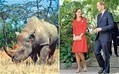 Rhino poached at refuge where Prince William proposed  - Telegraph | What's Happening to Africa's Rhino? | Scoop.it