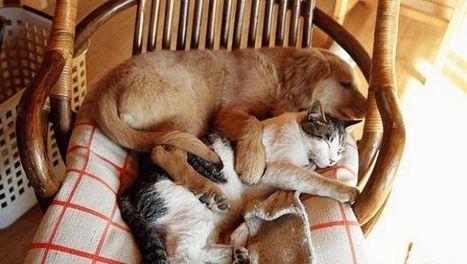 Ricetta veterinaria   ResVet e il farmaco...veterinario!   Scoop.it