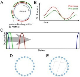 Protein Complex Formation: Computational Clarification of the Sequential versus Probabilistic Recruitment Puzzle | TECHNOLOGY=SCIENCE=CREATIVITY | Scoop.it